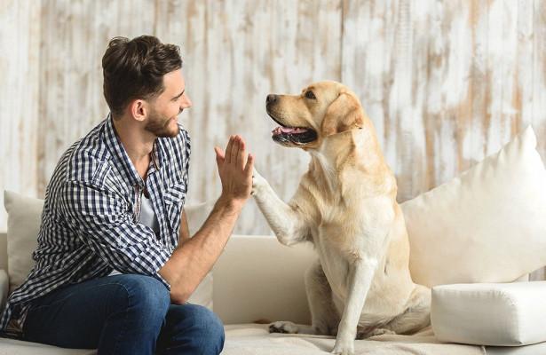 Собаки могут привести к пандемии гриппа