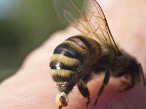 Как отличить аллергию на пчел от повышенной чувствительности
