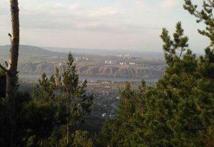 В Красноярском крае клещи стали еще активнее