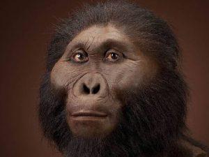 Генитальный герпес – «подарок» от древних обезьян