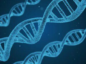 Найден ген, ответственный за иммунитет