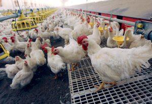 Роспотребнадзор усилил контроль у границ России из-за птичьего гриппа