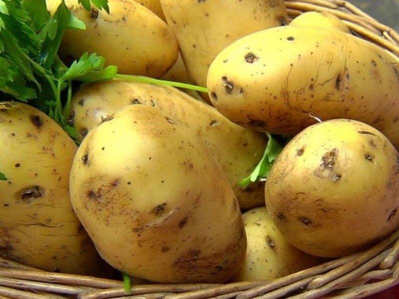 Картофель помогает вылечить гепатит