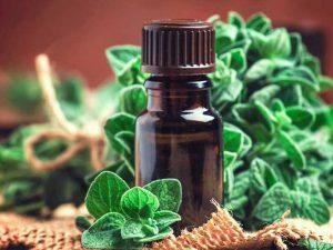 Масло душицы: применение и действие растительного антибиотика