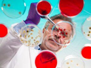 Вирус поможет выявить опасные бактерии в продуктах питания
