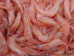 Креветки помогают бороться с инфекциями