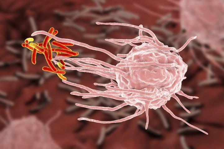 Как иммунитет реагирует на инфекцию?