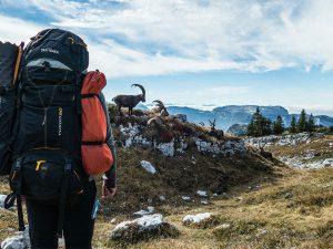 Где можно найти качественные туристические рюкзаки по хорошей цене