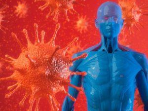 COVID-19: поиск причины поражения тканей сердца коронавирусом