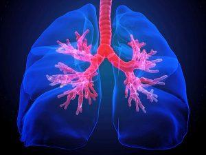 Лучшие продукты для поддержания здоровья легких и их защиты от заболеваний