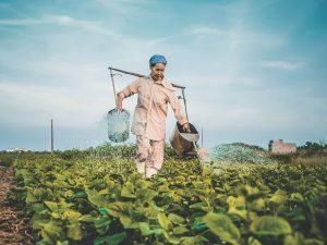Может ли растительный экстракт защитить от COVID-19