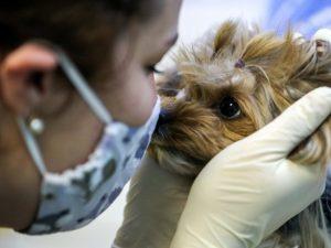 Covid-19 и домашние животные: как уберечь любимцев от болезни