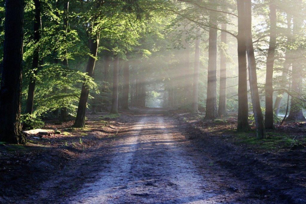 Пыльца деревьев оказалась одним из главных переносчиков коронавируса