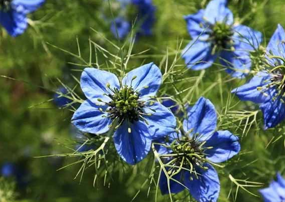 Ученые нашли растительное средство от коронавируса
